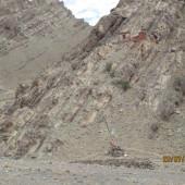 Medical Camp Ladakh 2014 (2)