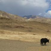 Medical Camp Ladakh 2014 (25)